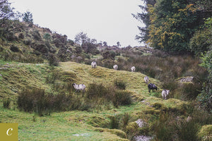 Dartmoor on October 4th 2020