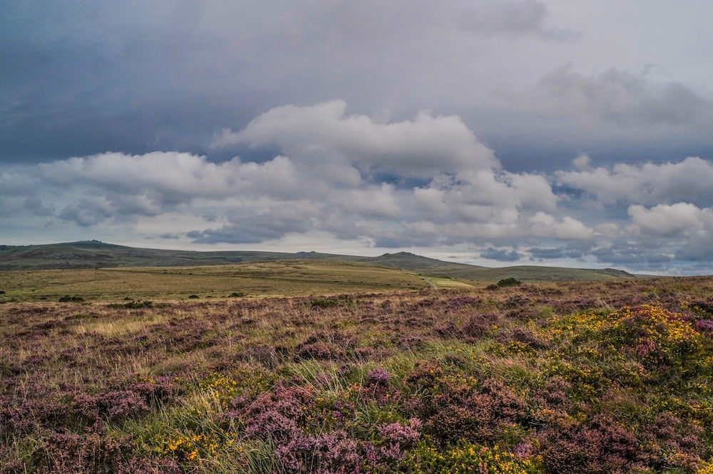 Dartmoor on September 2nd 2020