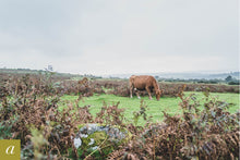 Load image into Gallery viewer, Dartmoor on September 24th 2020