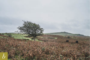 Dartmoor on September 24th 2020
