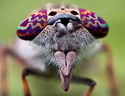 Horsefly nose