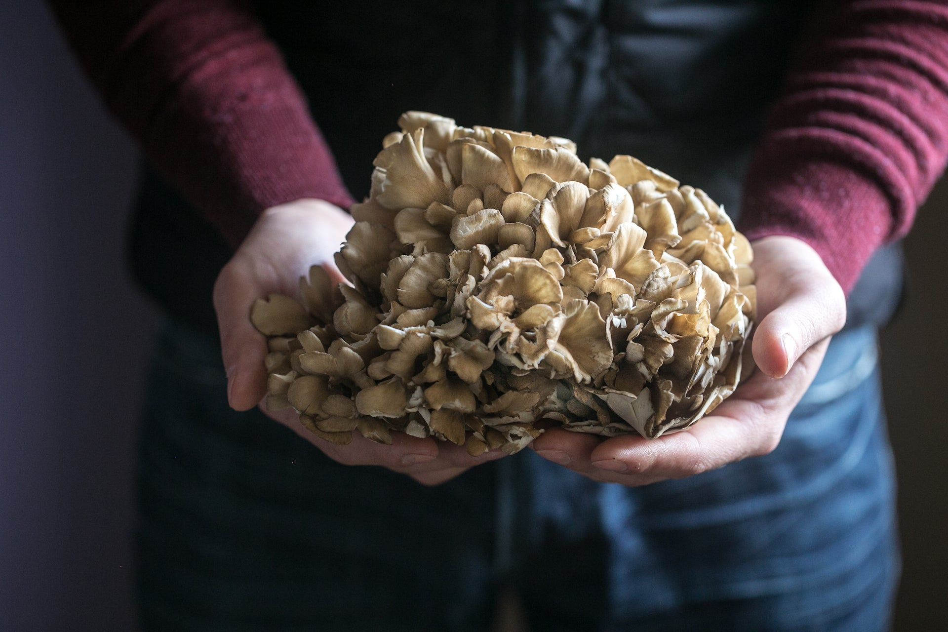 Man holding Mushroom King Farm's oyster mushrooms