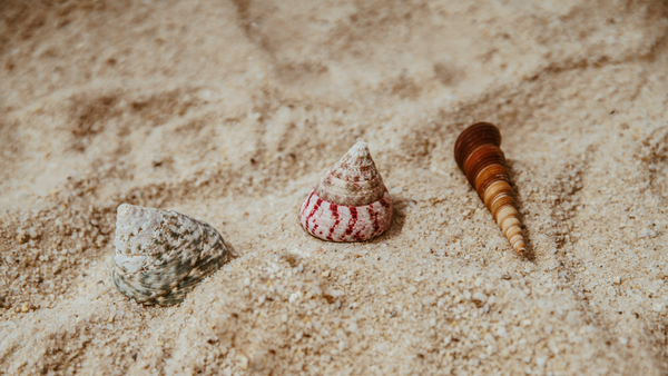 #EcoLivingFeed: That Special Seashells' Gift that not many people knew about!