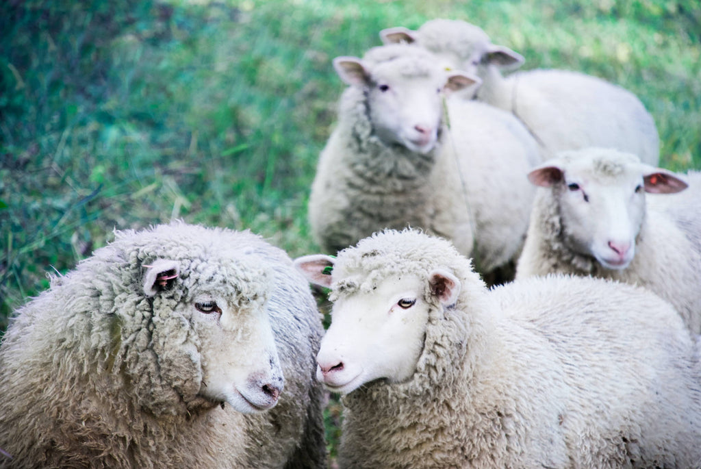 All You Need to Know About Wool