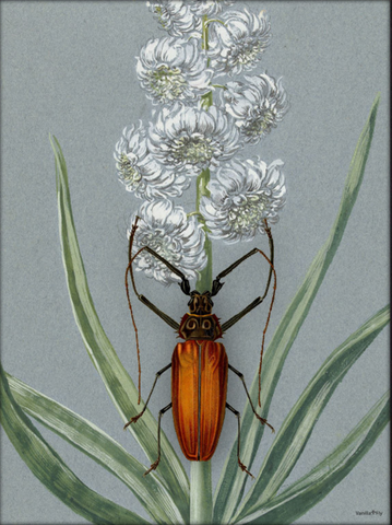 Poster Orange Beetleflower 30x40
