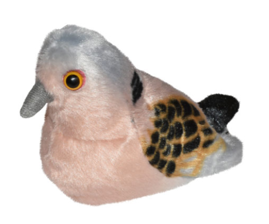 Birds - Turtle Dove