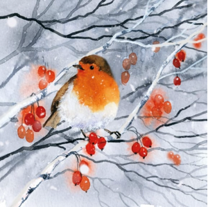 Robin, Snow and Berries