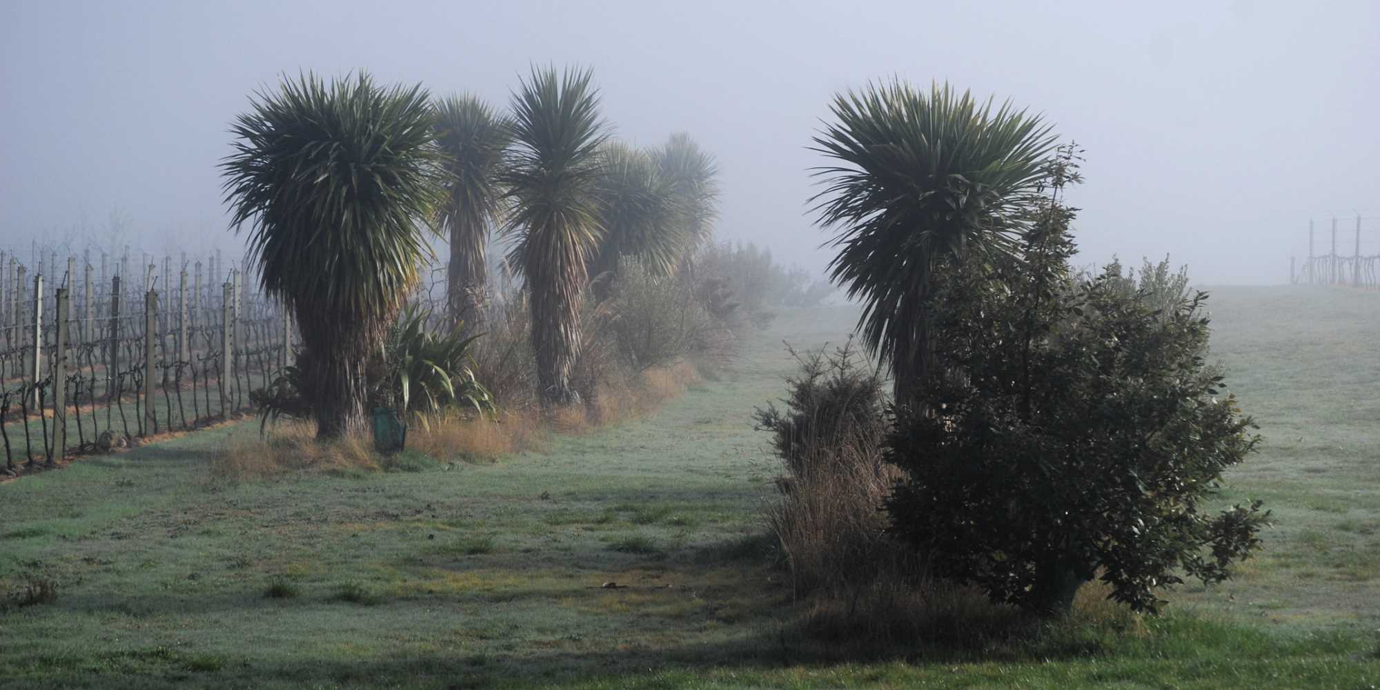 Natives in Mist