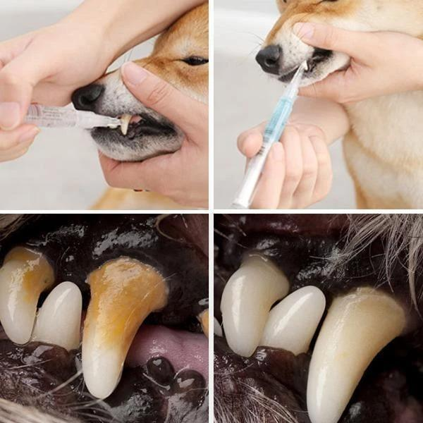 Pet's Teeth Health By Repairing And Preventing Diease