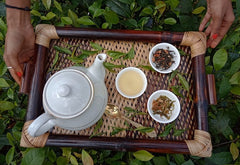 Organic Green Tea : A Healthier Choice