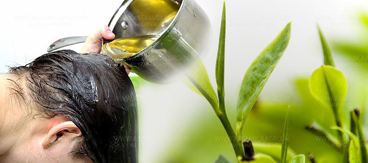 Green Tea For Hair care