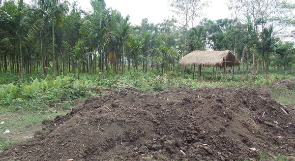 Organic Farming at Kanoka, Assam