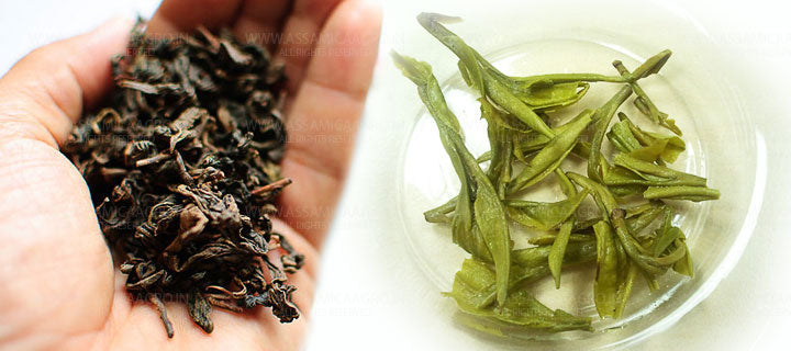 Brewed Green Tea Leaves