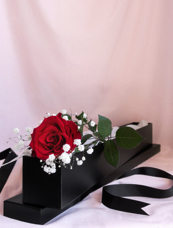 Long Stem Red Rose 60cm in a Box with white Gyp Valentine Day . Flower Me Softly