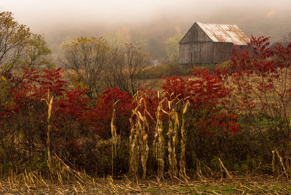 Fall Fog at the Farm, Salem, NY