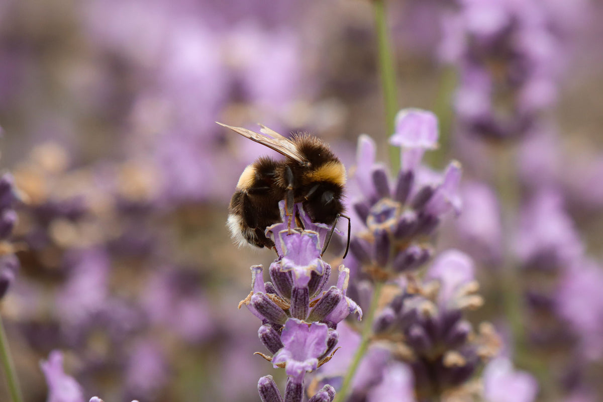 What Are The Best Flowers To Plant For Honey Bees?