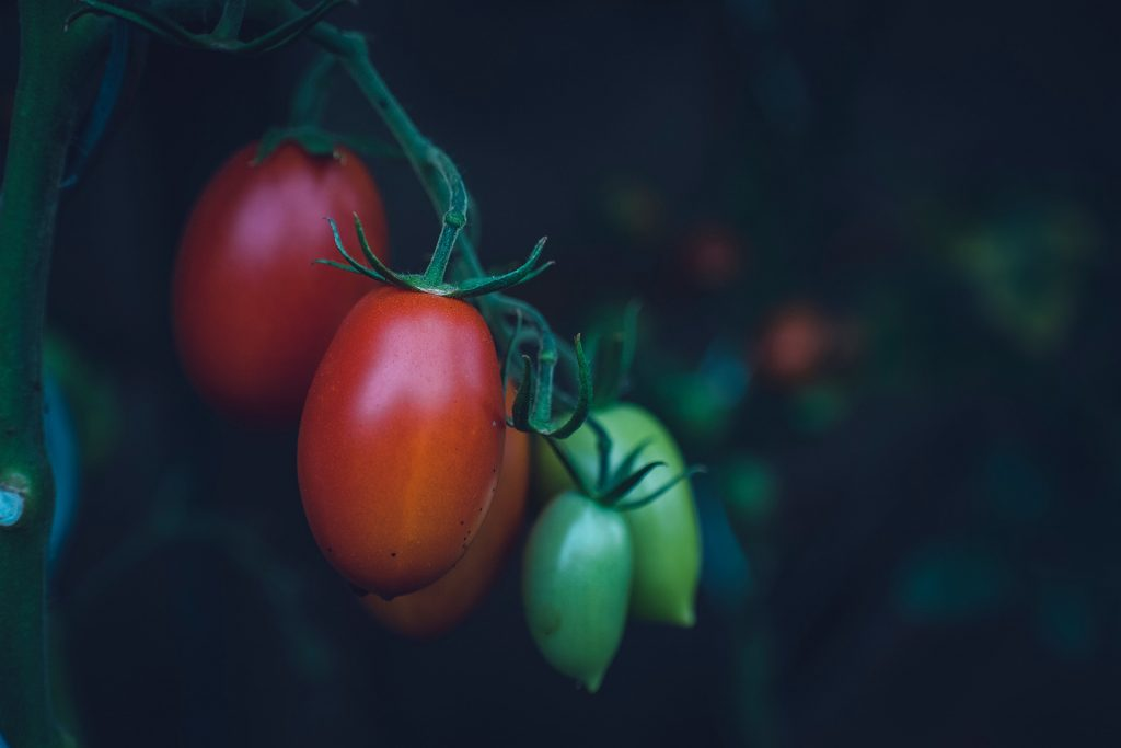5 Common Mistakes To Avoid When Growing Tomatoes In Containers