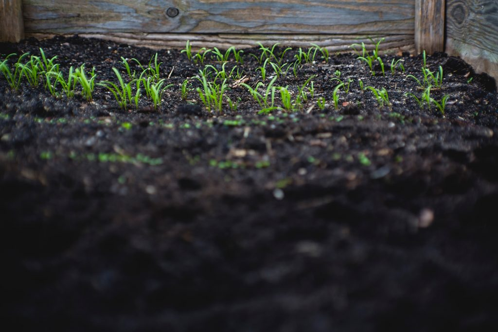 Do I Need To Add Nutrients To Garden Soil? Top Tips For Your Garden