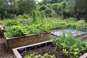 How Do I Keep My Raised Garden Bed From Drying Out? Our Top Tips