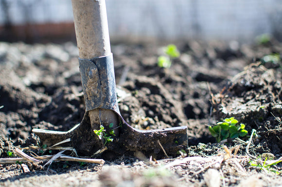 How To Prepare Your Vegetable Garden For Fall: Fall Gardening Tips