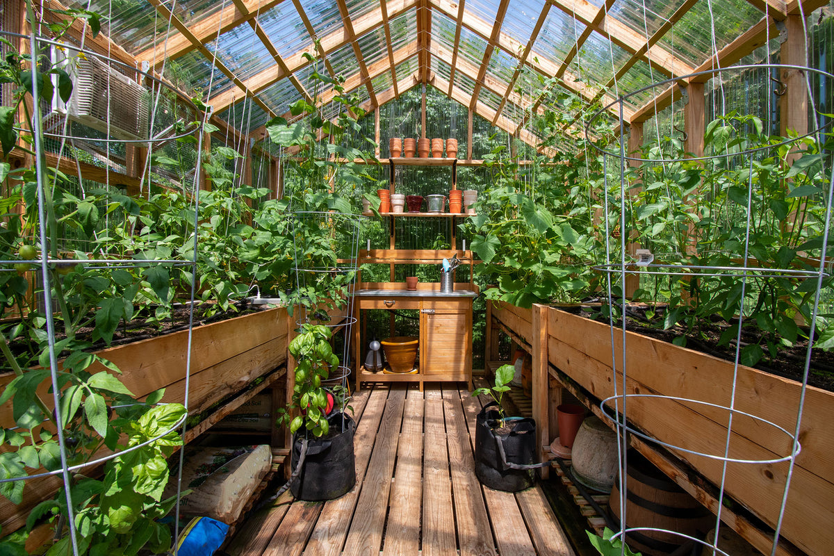 How to Grow Vegetables Outdoors in the Winter