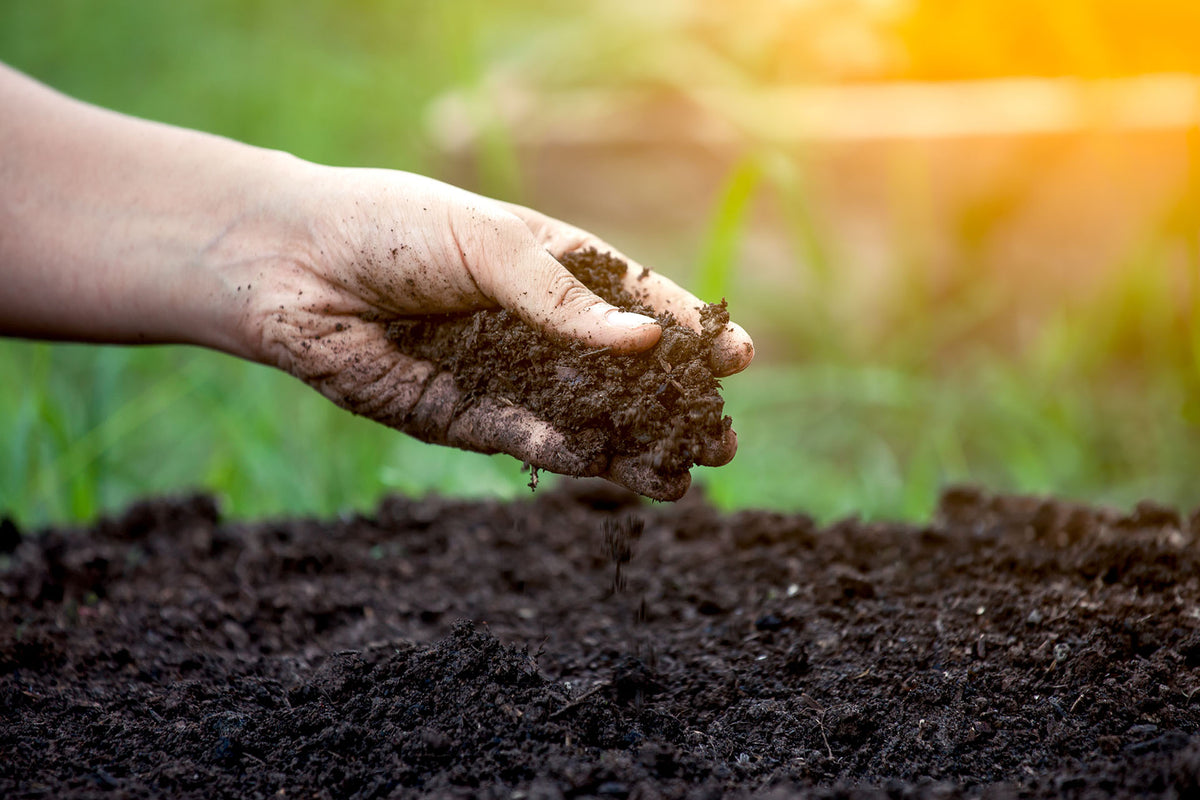 Is There A Difference Between Outdoor Soil, Potting Soil, And Potting Mix?