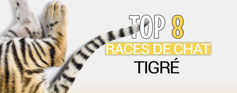 Race chat tigre