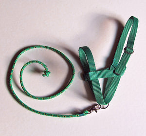 Dark Green halter and lead rope