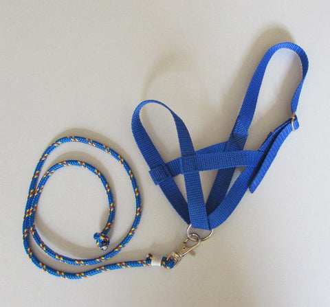 Blue halter and lead rope