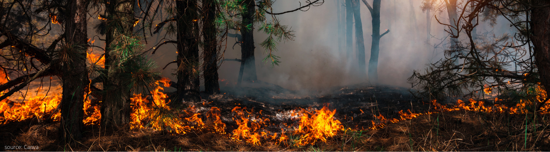 wildfires raging from unsustainable weather and living leading to chaos and destruction