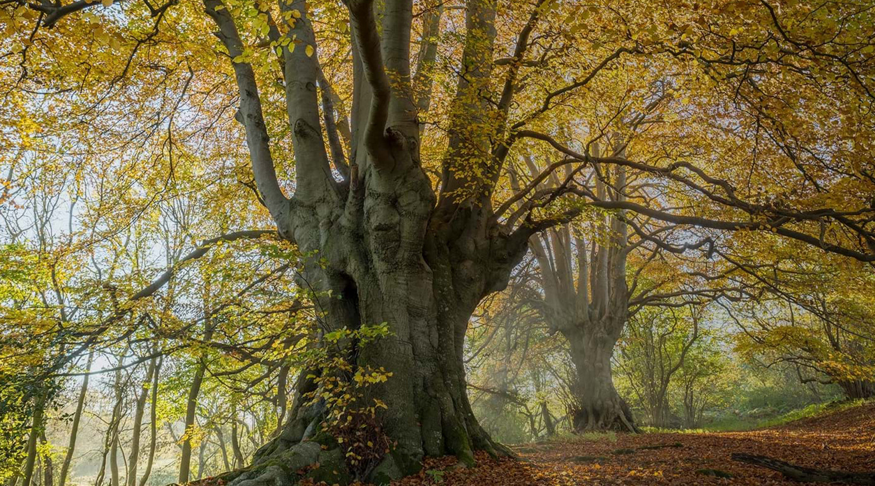 The Woodland Trust publishes first 'State of the UK's trees and woodland' report