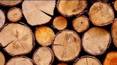wood logs for burning