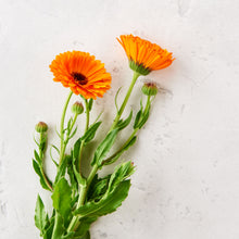 Load image into Gallery viewer, photo of marigold flowers