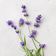 Load image into Gallery viewer, photo of lavender flowers
