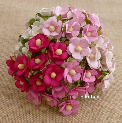 Wild Orchid - Sweetheart Blossom - Mixed Pink & White