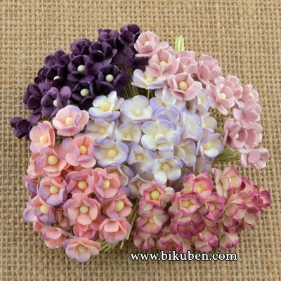 Wild Orchid - Miniature Sweetheart Blossom - Mixed Purple/Lilac
