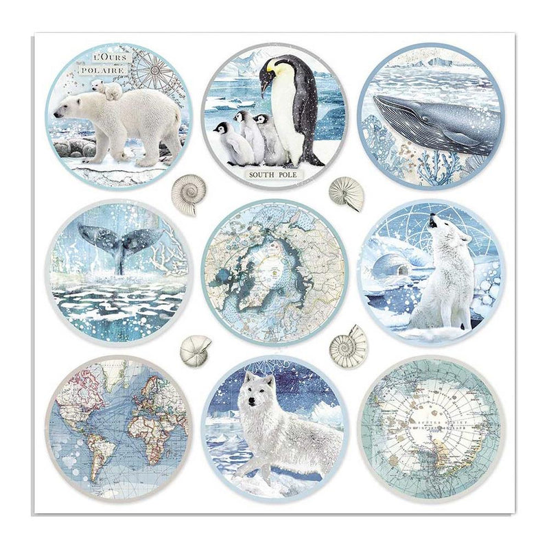 Stamperia - Arctic Antarctic - Rounds - 12 x 12""