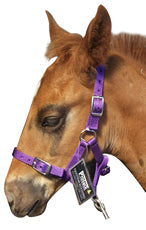 Protack Headcollar Adjustable Foal