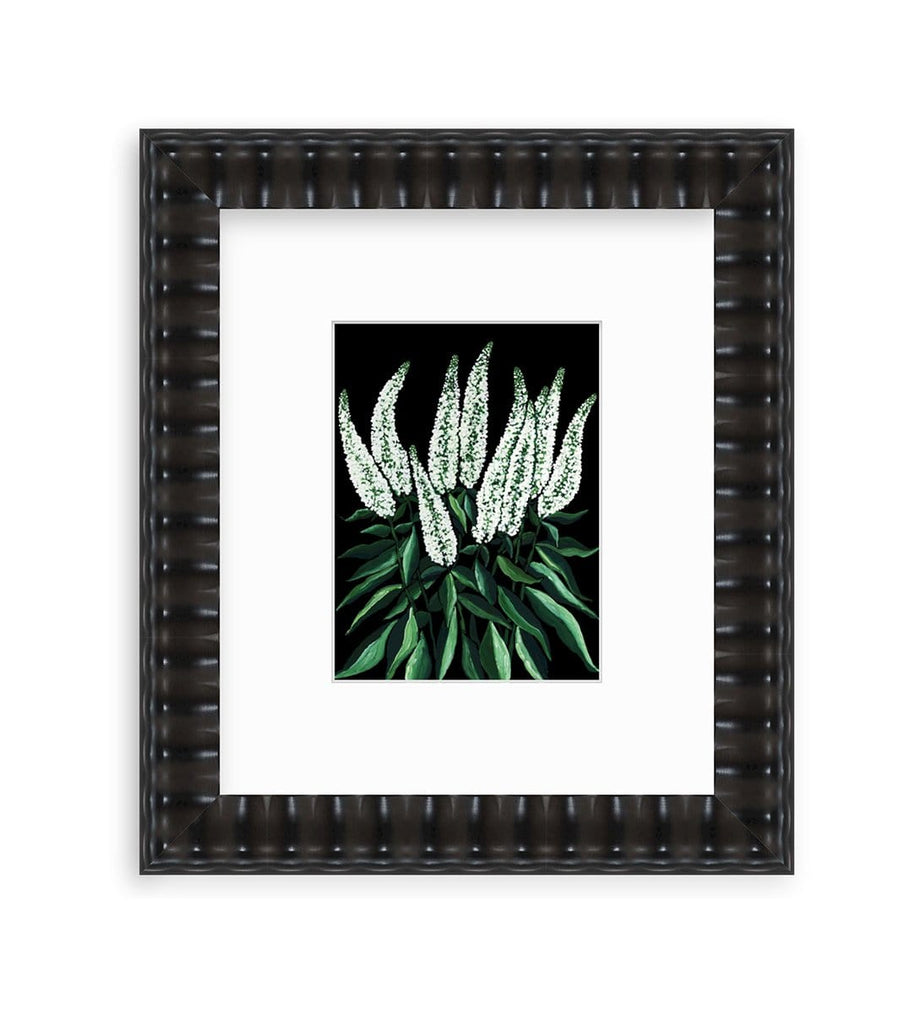 Dramatic spires of white veronica flowers with glossy deep green leaves glow on the black background of this 9x12 gouache painting on paper that is matted and framed in a wavy black frame.