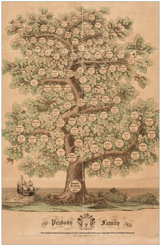 Peabody Family Tree Lithograph
