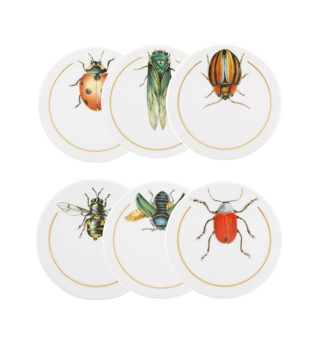 Insects - Set Of 6 Coasters