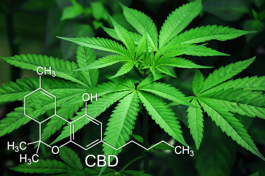Does CBD Oil Really Do Anything?
