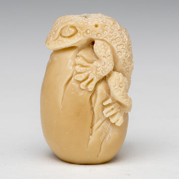 Gecko Emerging from Taqua Nut Egg