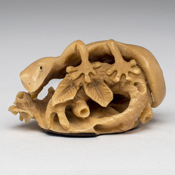 Carved Gecko from Taqua Nut