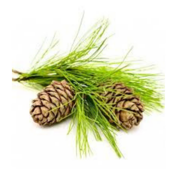 Cedarwood Essential Oil