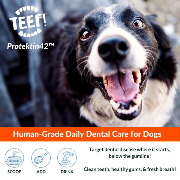 TEEF! Daily Dental Care