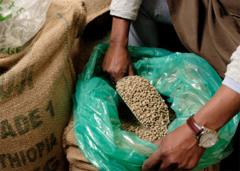 Small Producers of Organic Fairtrade Coffee from Ethiopia