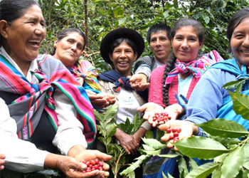 Small Producers of Organic Fairtrade Coffee from Peru