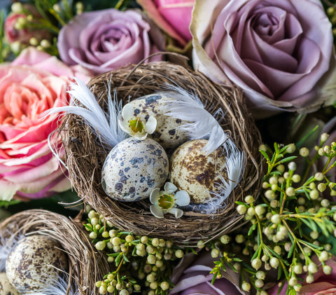 eggs, roses, and nest