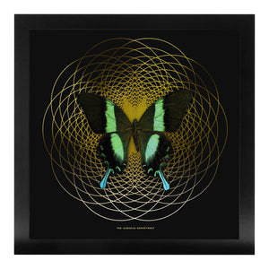 SPIRO Green Swallowtail: gold/ black